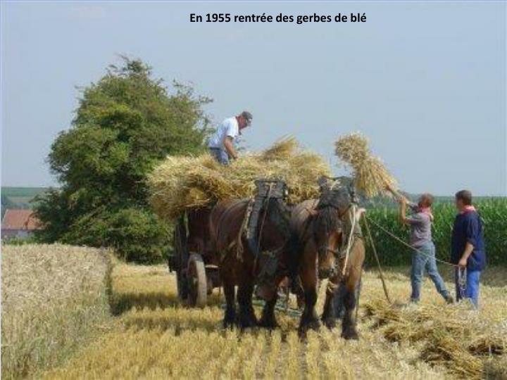 En 1955 rentrée des gerbes de blé