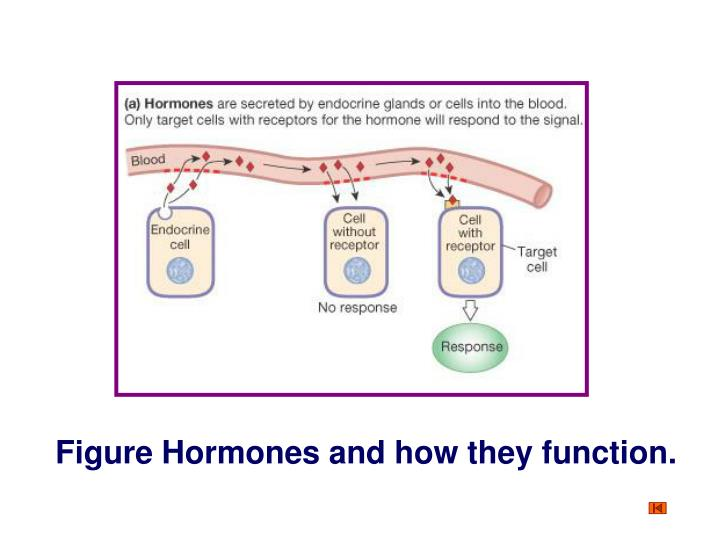Figure Hormones and how they function.