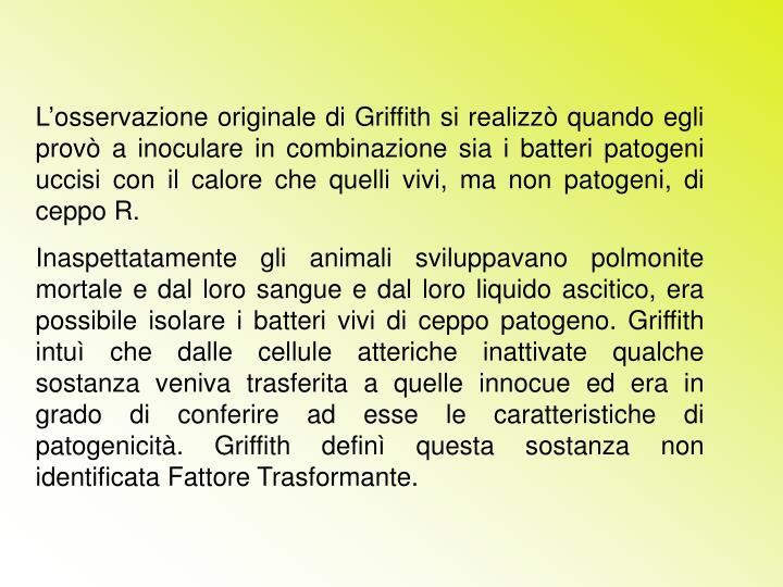 L'osservazione originale di Griffith si realizzò quando egli