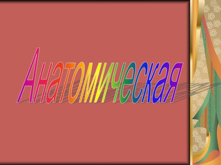 Анатомическая