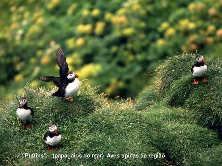 """""""Puffins"""" – (papagaios do mar)  Aves típicas da região"""