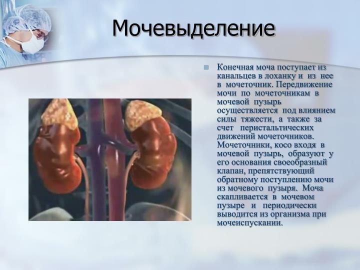 Мочевыделение