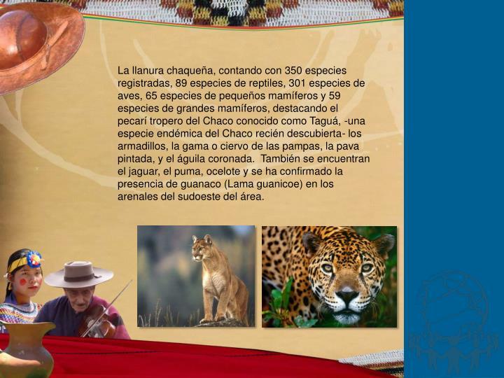 La llanura chaqueña, contando con 350 especies registradas, 89 especies de reptiles, 301 especies de aves, 65 especies de pequeños mamíferos y 59 especies de grandes mamíferos, destacando el pecarí tropero del Chaco conocido como Taguá, -una especie endémica del Chaco recién descubierta- los armadillos, la gama o ciervo de las pampas, la pava pintada, y el águila coronada.  También se encuentran el jaguar, el puma, ocelote y se ha confirmado la presencia de guanaco (Lama guanicoe) en los arenales del sudoeste del área.