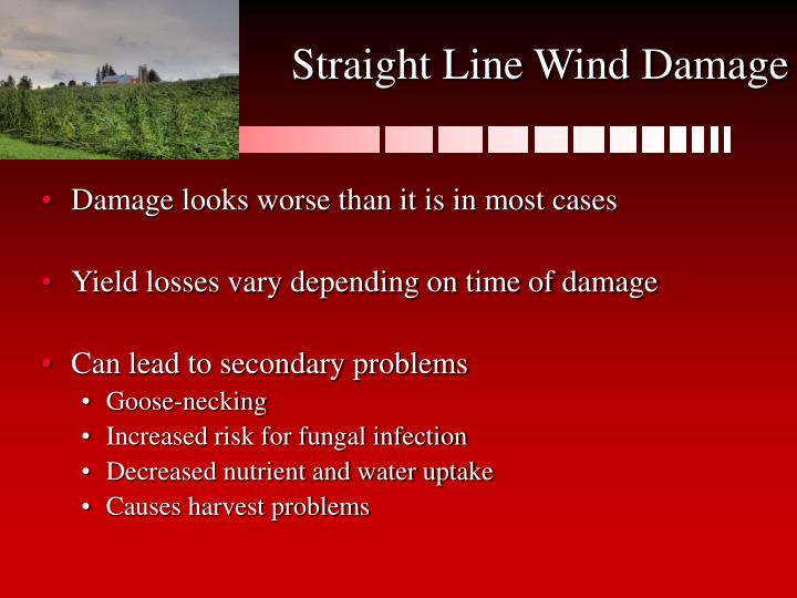Straight Line Wind Damage