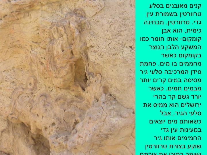 קנים מאובנים בסלע טרוורטין בשמורת עין גדי. טרוורטין, מבחינה כימית, הוא אבן קומקום- אותו חומר כמו המשקע הלבן הנוצר בקומקום כאשר מחממים בו מים. פחמת סידן המרכיבה סלעי גיר מסיסה במים קרים יותר מבמים חמים. כאשר יורד גשם קר בהרי ירושלים הוא ממיס את סלעי הגיר, אבל כשאותם מים יוצאים במעינות עין גדי החמימים אותו גיר שוקע בצורת טרוורטין ושומר בתוכו את צורתם של הקנים שהתקשה סביבם.