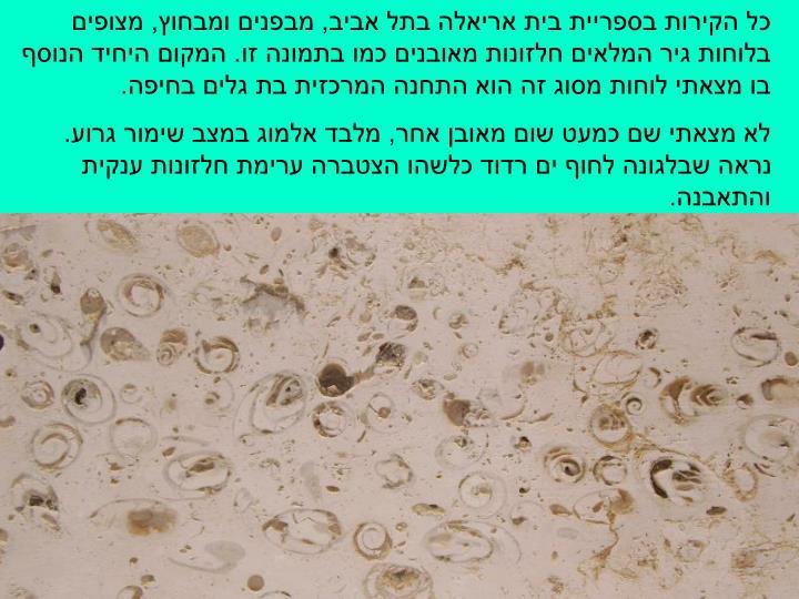 כל הקירות בספריית בית אריאלה בתל אביב, מבפנים ומבחוץ, מצופים בלוחות גיר המלאים חלזונות מאובנים כמו בתמונה זו. המקום היחיד הנוסף בו מצאתי לוחות מסוג זה הוא התחנה המרכזית בת גלים בחיפה.