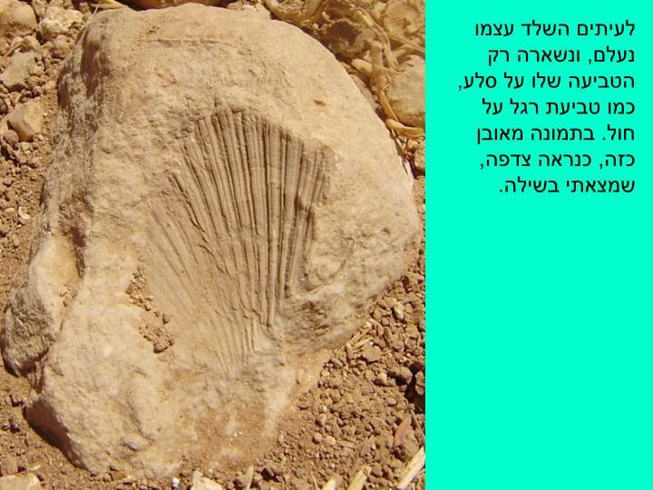 לעיתים השלד עצמו נעלם, ונשארה רק הטביעה שלו על סלע, כמו טביעת רגל על חול. בתמונה מאובן כזה, כנראה צדפה, שמצאתי בשילה.