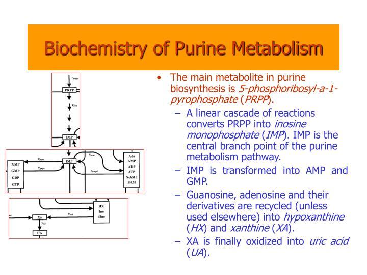 Biochemistry of Purine Metabolism