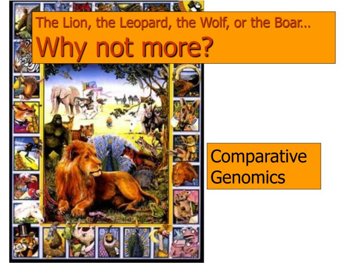 The Lion, the Leopard, the Wolf, or the Boar…