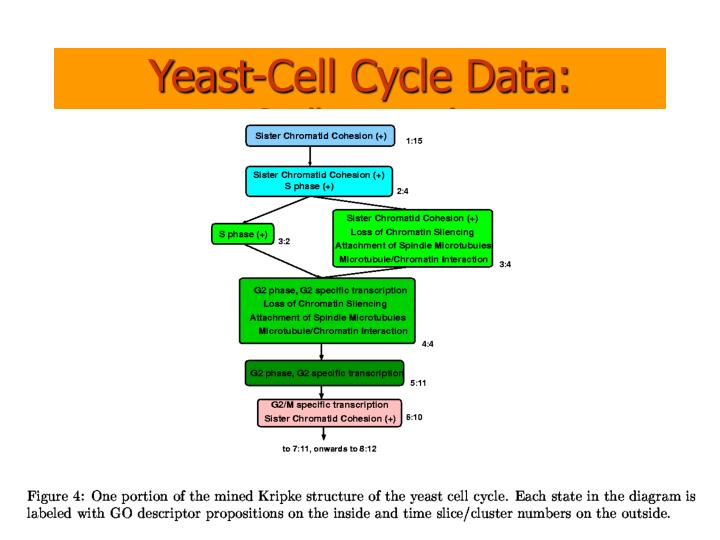 Yeast-Cell Cycle Data: