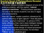 quantum secret of photosynthesis revealed4