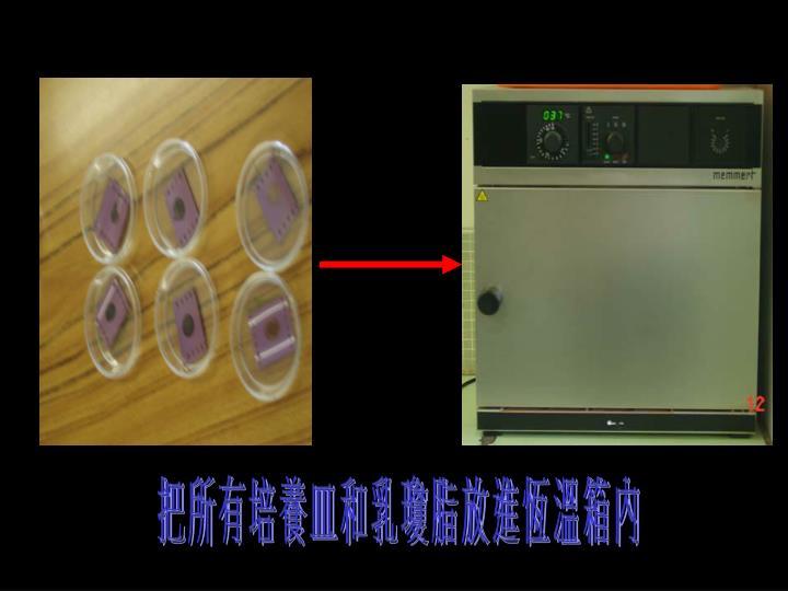 把 所 有 培 養 皿 和 乳 瓊 脂 放 進 恆 溫 箱 內