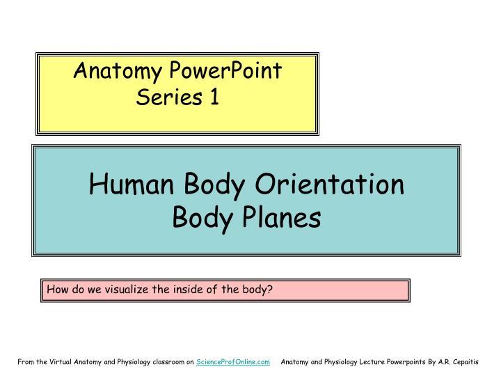 Human body orientation body planes