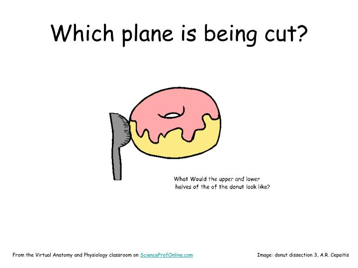 Which plane is being cut?