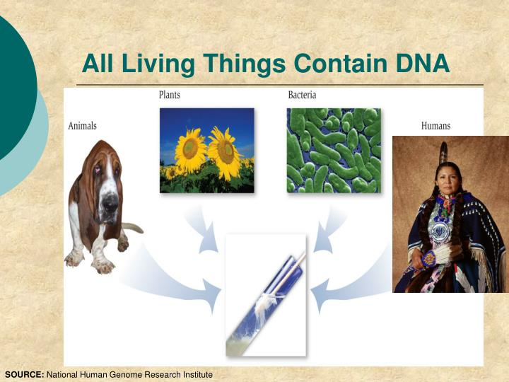 All Living Things Contain DNA
