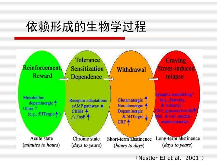 依赖形成的生物学过程
