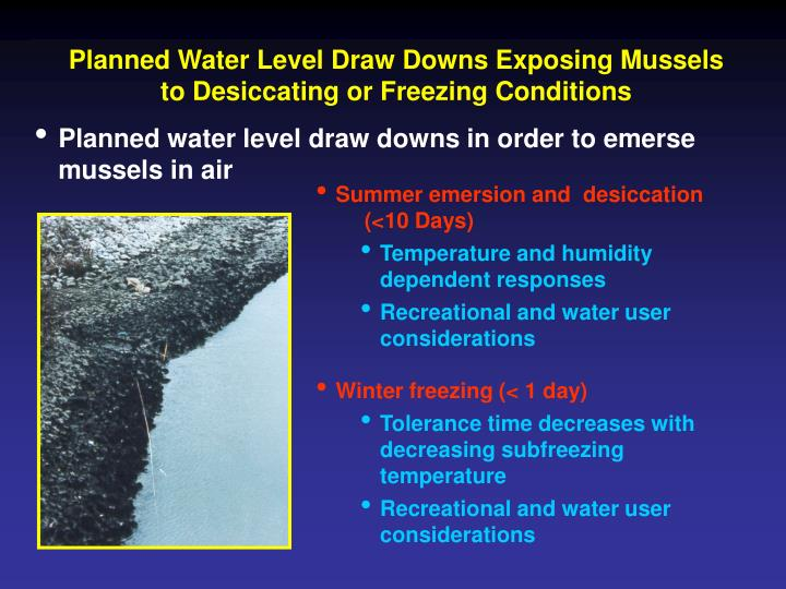 Planned Water Level Draw Downs Exposing Mussels to Desiccating or Freezing Conditions