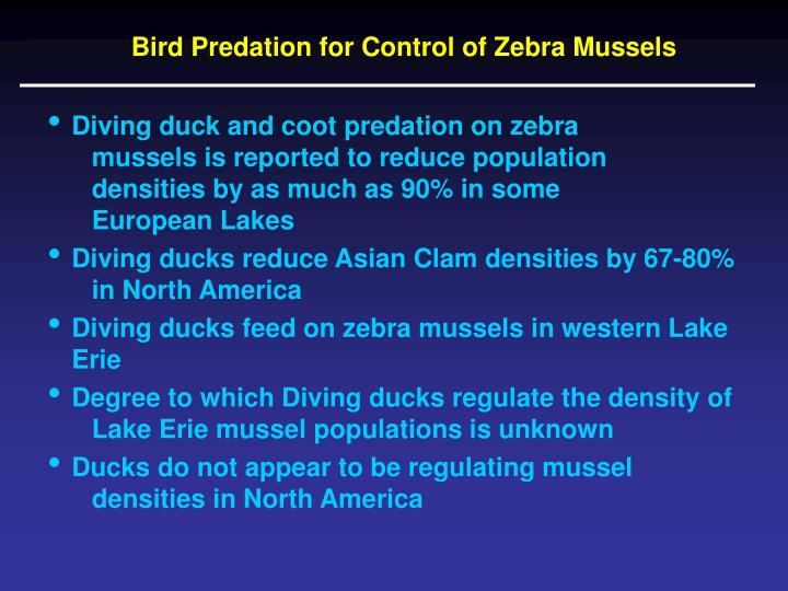 Bird Predation for Control of Zebra Mussels