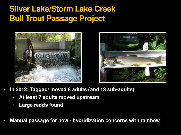 Silver Lake/Storm Lake Creek