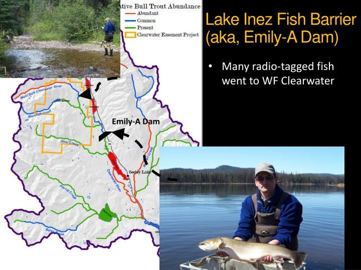 Lake Inez Fish Barrier (aka, Emily-A Dam)