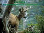 el huemul hippocamelus bisulcus especie de valor especial