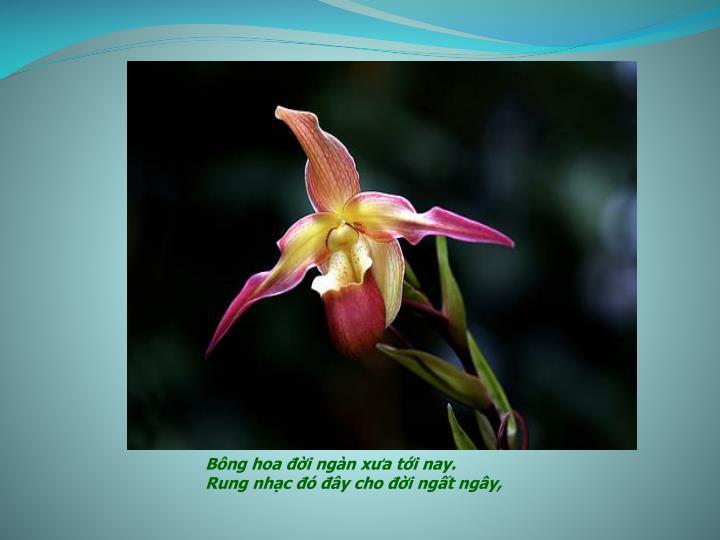 Bông hoa đời ngàn xưa tới nay.
