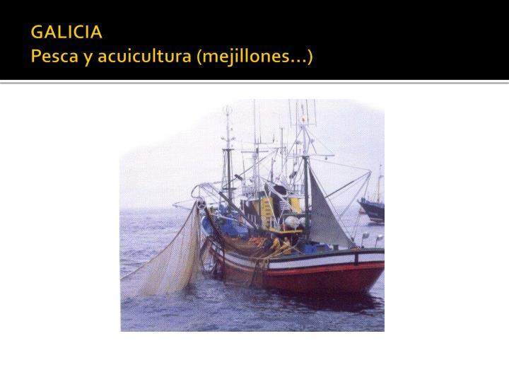 Galicia pesca y acuicultura mejillones
