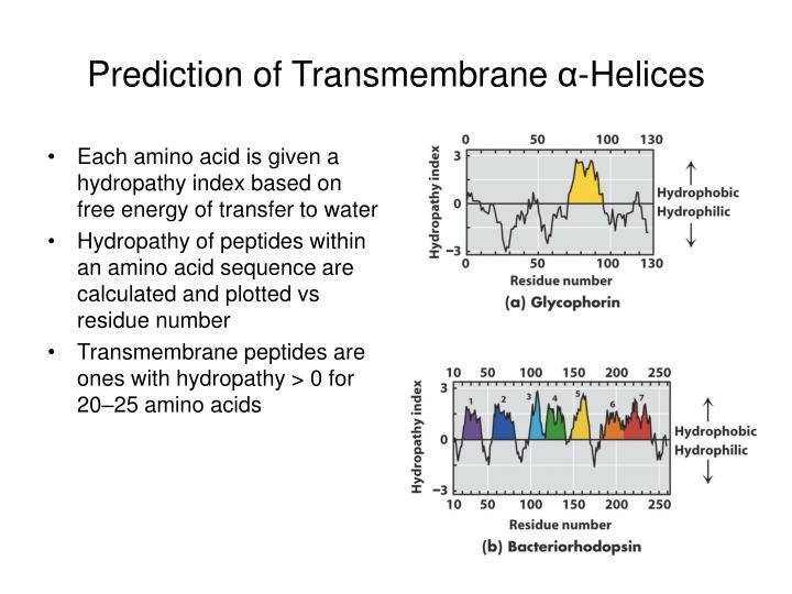 Prediction of Transmembrane