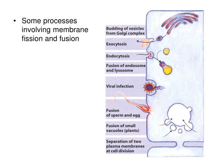 Some processes involving membrane fission and fusion