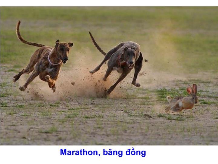 Marathon, băng đồng