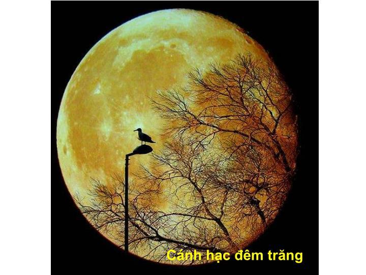 Cánh hạc đêm trăng