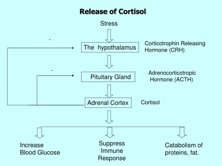 Release of Cortisol