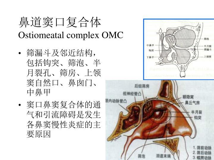 鼻道窦口复合体