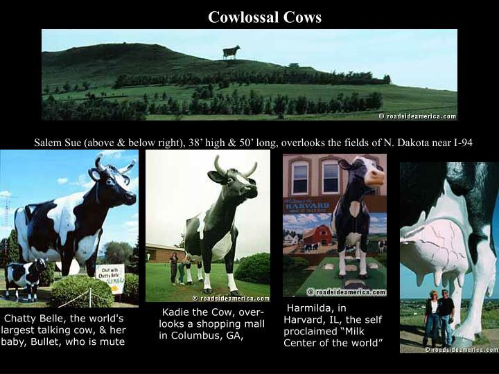 Cowlossal Cows