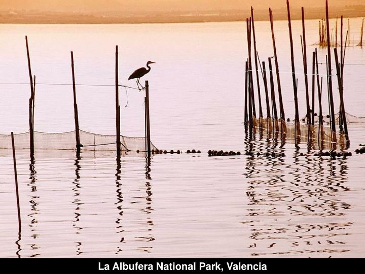 La Albufera National Park, Valencia