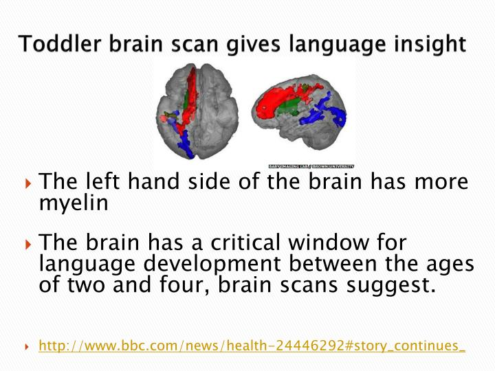 Toddler brain scan gives language insight