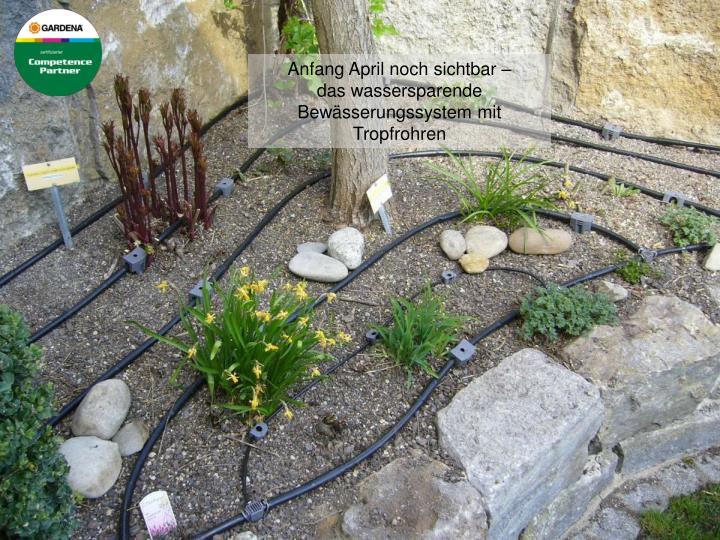 Anfang April noch sichtbar –                            das wassersparende Bewässerungssystem mit Tropfrohren
