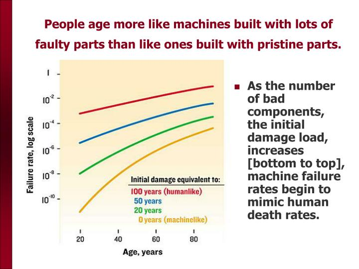 People age more like machines built with lots of faulty parts than like ones built with pristine parts.