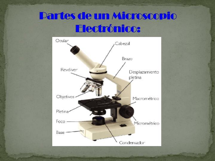 Partes de un Microscopio Electrónico: