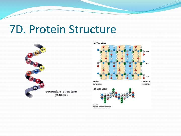 7D. Protein Structure