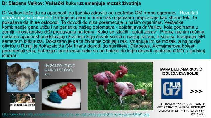Dr Slađana Velkov: Veštački kukuruz smanjuje mozak životinja