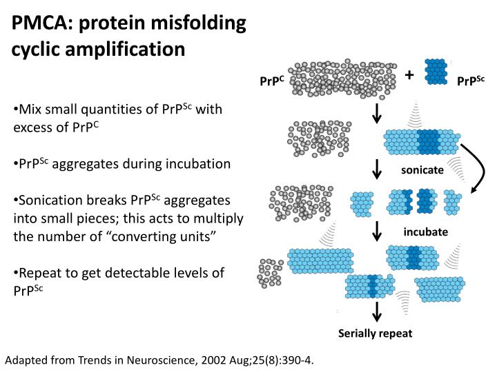 PMCA: protein
