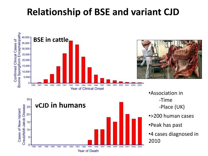 Relationship of BSE and variant CJD