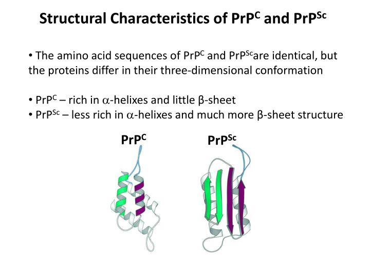 Structural Characteristics of PrP