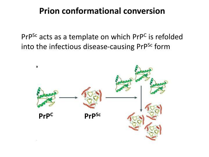 Prion conformational conversion