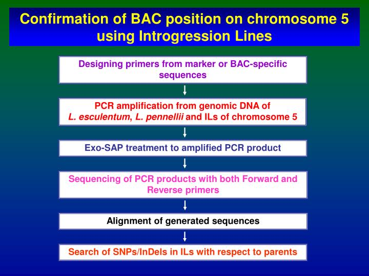 Confirmation of BAC position on chromosome 5 using Introgression Lines