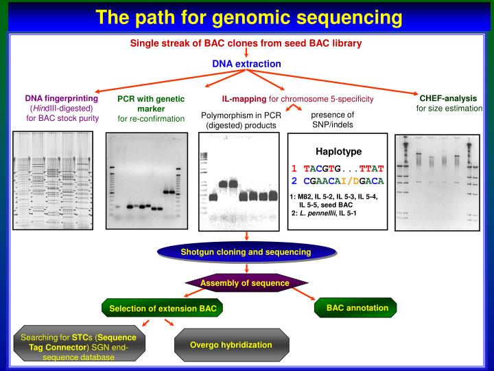 The path for genomic sequencing