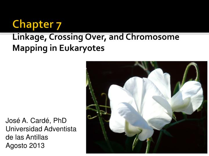 Chapter 7 linkage crossing over and chromosome mapping in eukaryotes