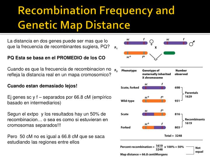 Recombination Frequency and Genetic Map Distance