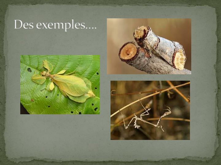 Des exemples….